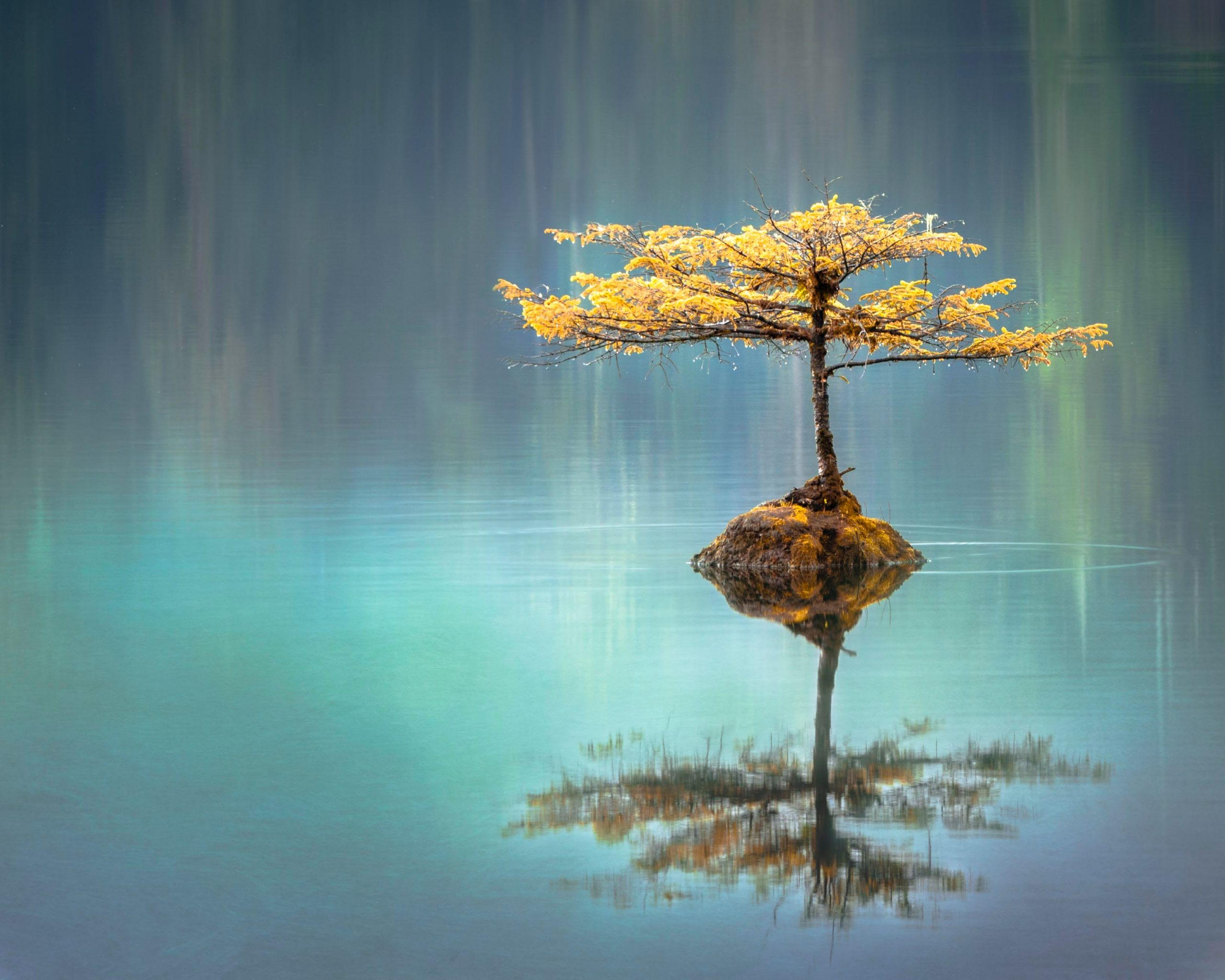 Tree in a lake